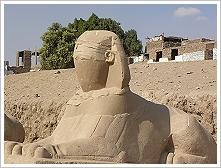One of the sphinxes found at the new road of Nectanebo I